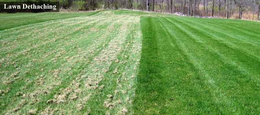 Lawn Dethatching Services Shawano Wi Quality
