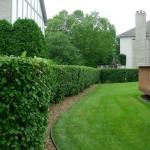 hedge and shrub timming