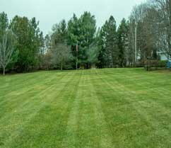 striped grass after lawn mowing